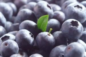Waarom zijn Hollandse blauwe bessen zo gezond?