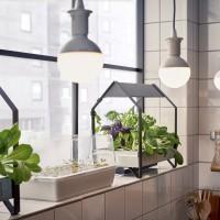 Zelf groenten kweken in huis